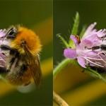 Filtre passe-haut - Image netteté avant et après