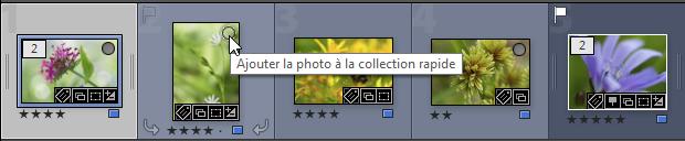 Ajouter la photo à la collection rapide en cliquant sur le rond dans la vignette