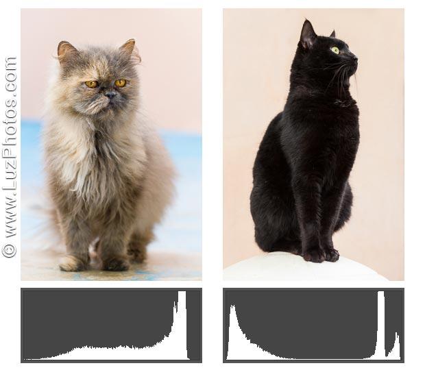 Histogrammes photo atypiques - Photo avec une majorité de tons clairs et photo sans tons moyens