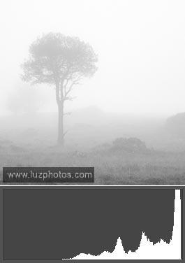 Histogramme photo calé à droite - Photo de paysage dans le brouilalrd avec une surexposition normale