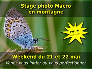 Stage macrophotographie dans les Pyrénées le weekend du 21 et 22 mai 2016