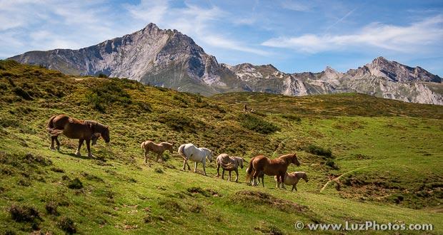 Stages photo nature dans les Pyrénées en 2016