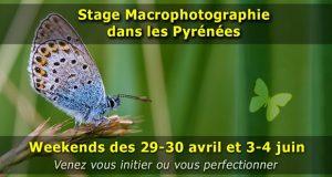 Stage photo rapprochée (proxy et macrophotographie) dans les Pyrénées