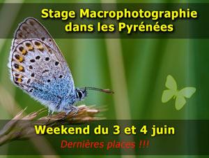 Stages photo macro dans les Pyrénées - 2017