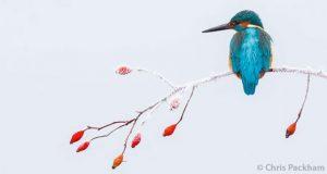 Photo de couverture du livre 2017 Bird Photographer Of The Year - Foreward by Chris Packham