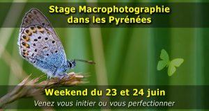 Stage photo macro en montagne dans les Pyrénées - weekend du 23 et 24 Juin 2018