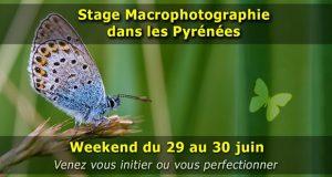 Stage photo rapprochée (macrophotographie et proxy-photographie) dans les Pyrénées