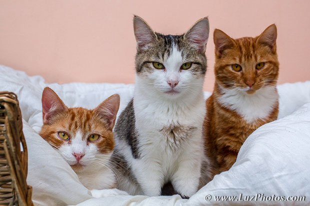 Flou de profondeur de champ : les 2 premiers chats sont bien nets mais le troisième à droite est légèrement flou (hors zone de netteté)