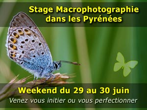 Stage photo macro en montagne dans les Pyrénées - weekend du 29 et 30 Juin 2019