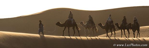 Voyage photo dans le sud du Maroc - Caravane de dromadaires