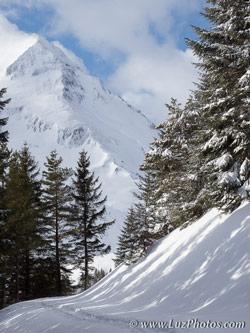 Stage photo d'hiver dans les Pyrénées - chemin enneigé entre les sapins