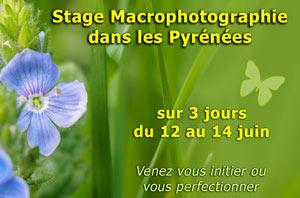 Stage photo macro sur 3 jours dans les Pyrénées