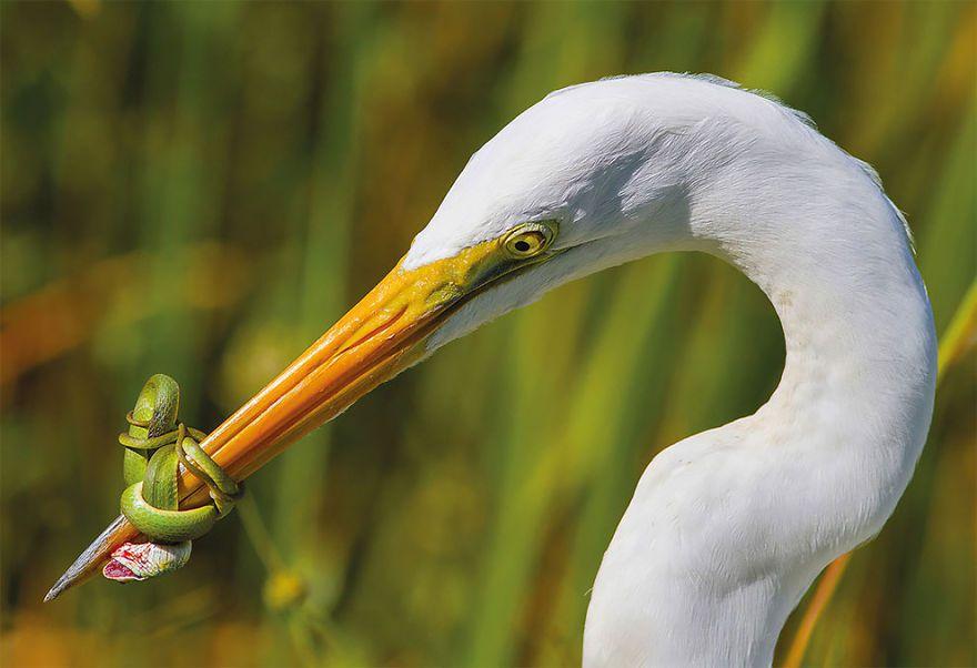 The Battle By Jose Garcia, US. Bird Behaviour Category