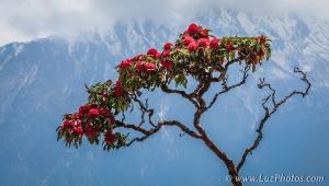 Voyage - Népal